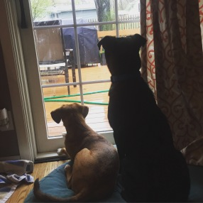Stella and Reuger on rabbit duty